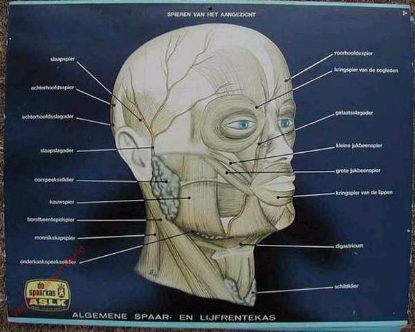 Spieren van het aangezicht